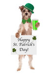 St Patricks Day Dog With Beer. A cute little dog wearing a green hat and tie holding a green beer and Happy St. Patrick's Day sign stock photos