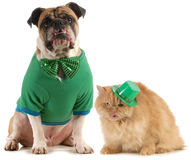 St patricks day dog and cat. Isolated on white background stock photography