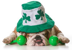 St Patricks Day dog Royalty Free Stock Photo