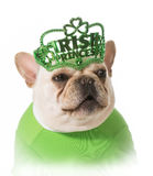 St Patricks Day dog. French bulldog royalty free stock photos