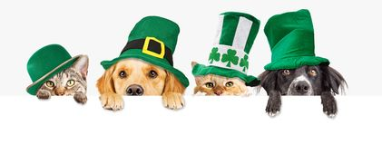 St Patricks Day Dogs and Cats Over Web Banner. Row of cute dogs and cats wearing green St Patrick`s Day hats while peeking over a blank white web banner or royalty free stock image