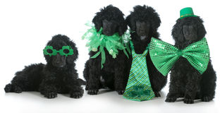 St. Patricks Day dogs Royalty Free Stock Images