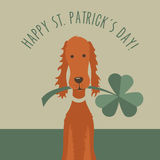 St. Patricks day greeting with funny Irish Setter Stock Image