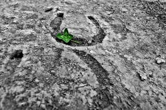 St. Patricks day, lucky charms. Four leaved clover on horseshoe prints in the dry mud Royalty Free Stock Photo
