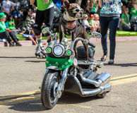 St. Patricks Day Parade. Boston terrier rides a miniature motorcycle in San Diegos annual St. Patricks Day Parade Royalty Free Stock Photo