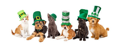 St Patricks Day Puppies and Kittens. A large group of young kittens and puppies together wearing green St. Patrick's Day hats royalty free stock photos