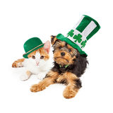 St Patricks Day Puppy and Kitten. Yellow gold kitten laying next to a Yorkshire Terrier puppy. Both wearing St Patrick's Day hats stock photos