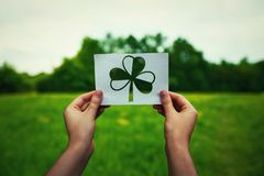 st patricks dnia koniczyny symbol fotografia royalty free