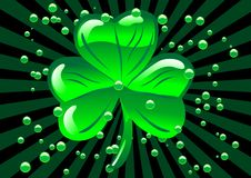 St Patricks shamrock Royalty Free Stock Photo
