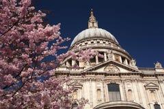 St Paul Kathedraal in de lente Stock Fotografie