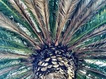 St Paul& x27; s Palm Stock Foto