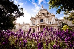 St Paul's in the spring, daytime royalty free stock photography