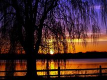 St.Paul Sunset. Saint Paul Minnesota spring willow tree at sunset Stock Photos