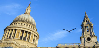 St. Pauls Cathedral in London Royalty Free Stock Image