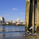 St. Pauls Cathedral. A view of the dome of the famous St. Paul's Cathedral London shot from the southern shore of the River Thames at low tide Stock Images