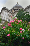 St Pauls with flowers Royalty Free Stock Image