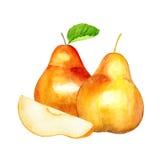 Söt pear Höstfrukt för flygillustration för näbb dekorativ bild dess paper stycksvalavattenfärg Royaltyfria Bilder