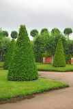 st petersburg России peterhof сада Стоковые Фото