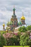 St Petersburg au printemps Images libres de droits