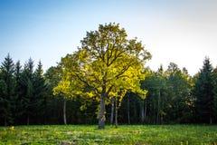 St Petersburg, automne, parc, forêt, photos stock