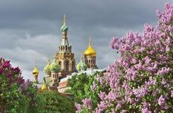 St Petersburg i vår Royaltyfri Foto