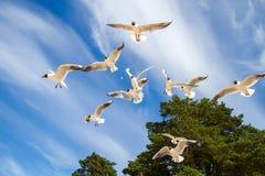 St Petersburg Il golfo della Finlandia Gabbiani di mare contro un cielo blu fotografia stock