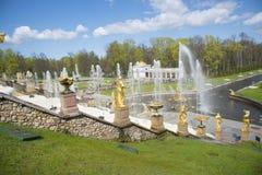 ST PETERSBURG PETERGOF, RYSSLAND - Maj 9, 2015: Springbrunnar av lägre trädgårdar, havskanal i Peterhof, nära St Petersburg Arkivfoto