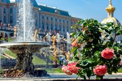 St Petersburg, Rússia-Jule 29, 2018 Fontes da cascata grande em Peterhof imagens de stock royalty free