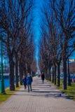 ST PETERSBURG, ROSJA, 02 2018 MAJ: Plenerowy widok niezidentyfikowani ludzie chodzi w parkowym otaczaniu susi drzewa Zdjęcie Stock