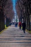ST PETERSBURG, ROSJA, 02 2018 MAJ: Plenerowy widok niezidentyfikowani ludzie chodzi w parkowym otaczaniu susi drzewa Fotografia Royalty Free