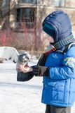 ST PETERSBURG ROSJA, MARZEC, - 05: Dziecko karmi gołębia od ręk ROSJA, MARZEC 05 2017, - Obraz Royalty Free