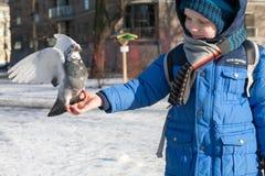 ST PETERSBURG ROSJA, MARZEC, - 05: Dziecko karmi gołębia od ręk ROSJA, MARZEC 05 2017, - Obrazy Royalty Free