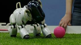 St Petersburg, Rusia - 12 de noviembre de 2018: El perro del robot está empujando la bola metrajes