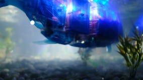 St Petersburg, Rusia - 12 de noviembre de 2018: Robot del cyborg de los pescados con los bulbos dentro de nadadas en un acuario almacen de metraje de vídeo