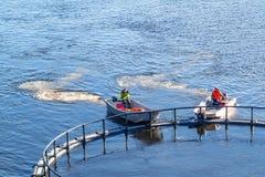 St Petersburg, Rusia - 10 de octubre de 2018: Granja de pescados en el r?o Hombres en el transbordador del barco la jaula con los fotografía de archivo libre de regalías