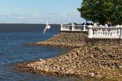Free St. Petersburg, Russia - June 28, 2017: Embankment With Stone Banks And White Railings. Peterhof In St. Petersburg. Royalty Free Stock Photos - 96325158