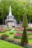 St Petersburg, RUSSIA-JUNE 03, 2017 Fontanna w parku Petrodvorets Zdjęcie Stock