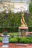 St Petersburg, RUSSIA-JUNE 03, 2017 Fontanna w parku Petrodvorets Obraz Royalty Free