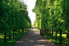 St. Petersburg, Russia - June 28, 2017: Green alley in Peterhof in St. Petersburg. Petersburg Royalty Free Stock Photography