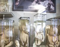 St. Petersburg, Russia-October 08, 2016: exhibits of the Museum of anthropology and Ethnography of the Kunstkammer. Embryos in ban. Interiors of the Museum of stock images