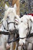 St Petersburg, Russie Une équipe de cheval au trellis de jardin de Mikhailovsky photos stock
