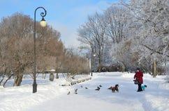 St Petersburg Ryssland, Fabruary, 22, 2018 Äldre kvinna med liten hundkapplöpning som går i den Smolny trädgården i solig dag för arkivbild