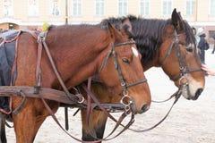 St Petersburg Ryssland, Januari 2, 2019 Två turister för hästridning på slottfyrkant arkivfoton