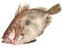 St Pierre Fish crudo foto de archivo