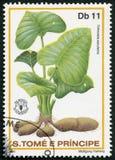 St THOMAS ET PRINCE ISLANDS - 1981 : expositions Colocasla esculenta, bulbes les légumes à racine taro, jour de nourriture du mon Image stock