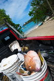 St. Thomas, US Virgin Islands Fresh Catch Stock Photography