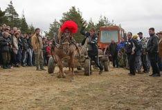 St Todor 's dag Het ras met paarden en van de paardentrekkracht karren met zwaar opent Todorov-dag het programma Stock Foto's