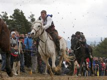 St. Todor 's day. Race with horses and horses pull carts with heavy logs on Todorov day. St. Todor 's day. Race with horses and horses pull carts with heavy Royalty Free Stock Images