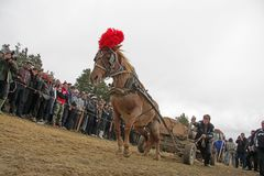 St. Todor 's day. Race with horses and horses pull carts with heavy logs on Todorov day. stock images