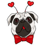 St. Valentine Pug Dog Royalty Free Stock Photo